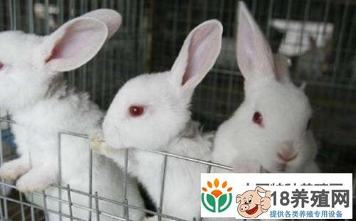 现在养殖100只兔子利润有多少?