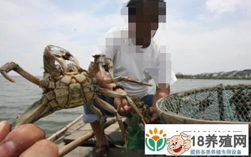 螃蟹怎么养殖方法有哪些?