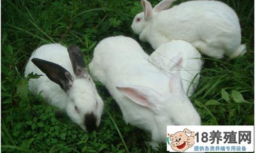 养殖兔子喜欢吃什么食物呢?