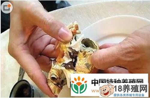 螃蟹的吃法剥法图解大全