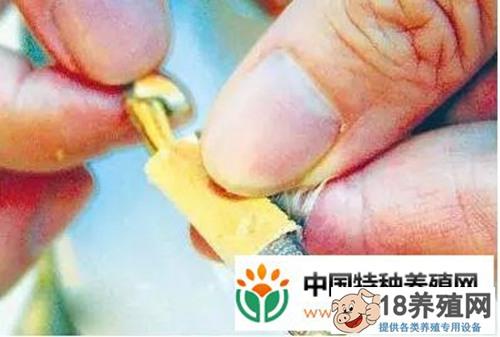 螃蟹的吃法剥法图解大全(2)