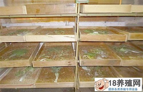 黄粉虫的培育方法