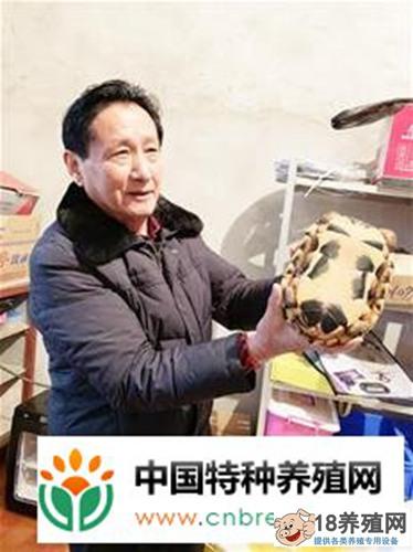 煤老板杨回乡搞养殖:一只金钱龟价值90万元!