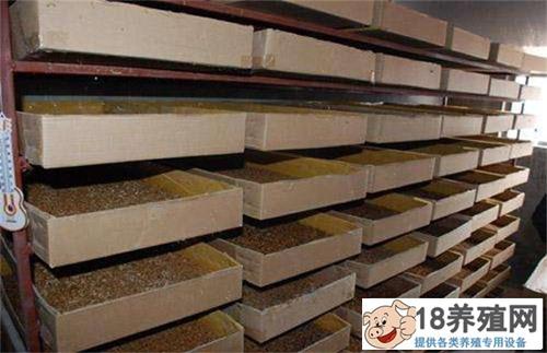 冬季养殖黄粉虫的五点经验(2)