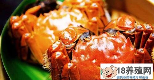 大闸蟹几月份才是最好吃的时候呢?