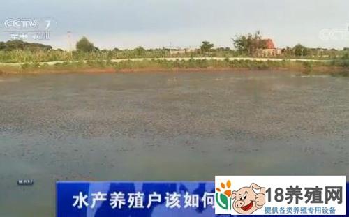 水产养殖户该如何应对高温天气