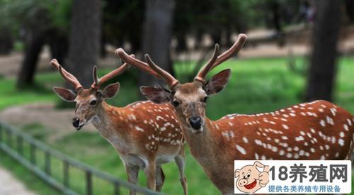 养鹿一般怎么找销路呢?