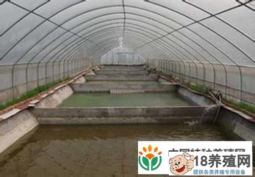 大棚泥鳅怎么养 大棚养殖泥鳅技术奉上