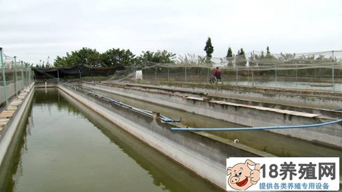四川广汉刘家学种水稻养青蛙和泥鳅一亩塘多赚三四千(3)