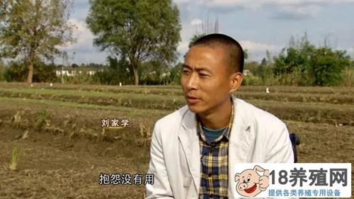四川广汉刘家学种水稻养青蛙和泥鳅一亩塘多赚三四千(2)