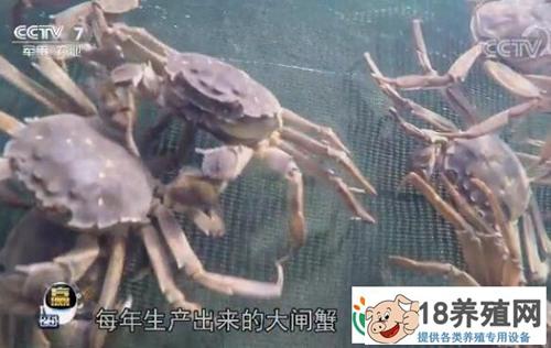 互联网+ 为大闸蟹养殖带来好收益