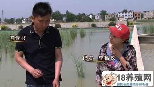 何传书和父亲打擂台养甲鱼创年销售额2000多万