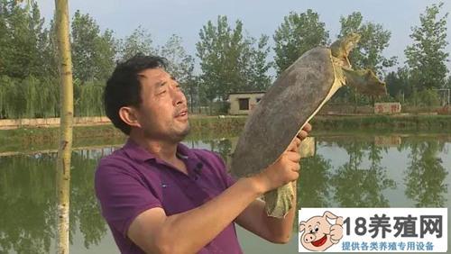 山东菏泽赫广武仿野生养殖黄河鳖年销千万元