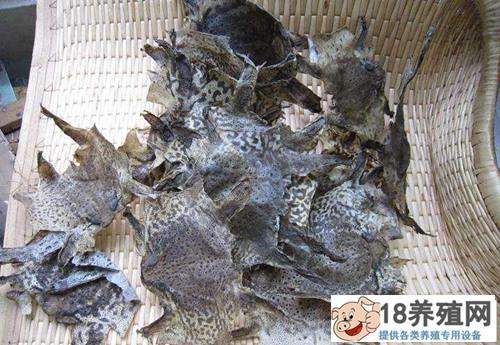 蟾蜍的蜕衣及制作技术(2)