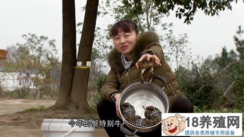 重庆武隆90后女孩樊霞山顶上养螃蟹年销600万(2)
