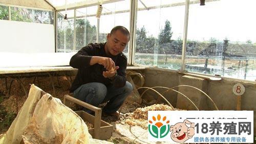广西王大铭龟鳖养殖的发财致富路