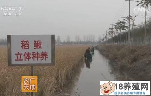 天津宝坻稻鳅混养技术