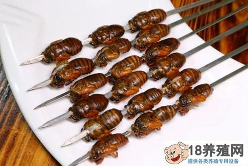 吃金蝉过敏怎么办?(2)