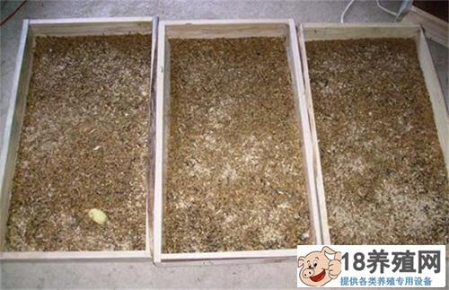 黄粉虫的高产技术(3)