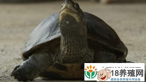 张光宋养殖珍稀龟的财富真相