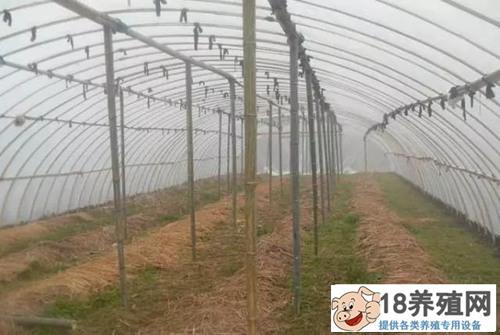 利用闲置资源养殖蚯蚓,一亩纯利润1万元!