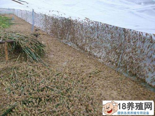 怎样建蚂蚱养殖大棚(2)