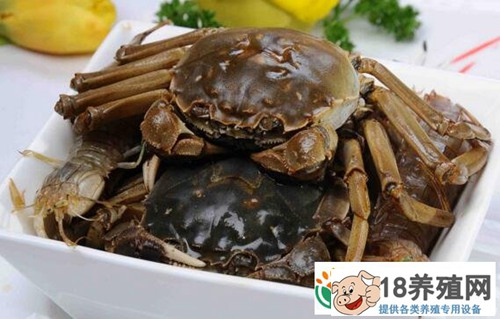 朱夏峰养螃蟹论个卖,立体套养和冬季暂养错季上市效益好!