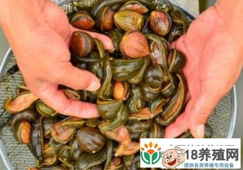 嘉鱼县:养殖水蛭让几名年轻人走上创业致富路