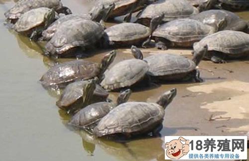 养殖甲鱼各时期的池塘建造(2)
