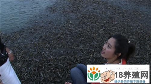 江西赣州杨丽养殖泥鳅 富家女遇到用钱解决不了的事之后(4)