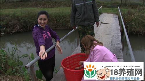 江西赣州杨丽养殖泥鳅 富家女遇到用钱解决不了的事之后