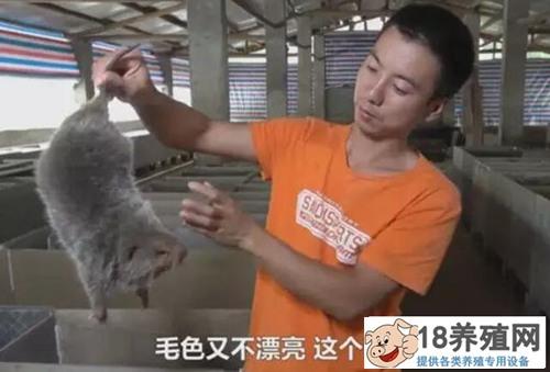 蒋扬杰养竹鼠赚钱有绝招,关进小黑屋一斤肉能卖100元!