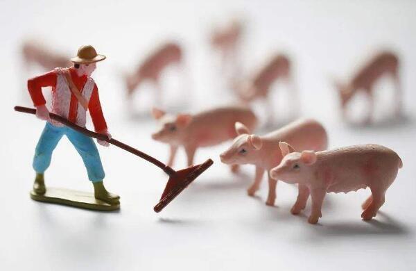 """从4月1日起,生猪运输将逐步受到限制,""""北肉南运""""可能成为一种趋势"""