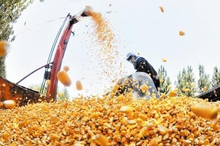 玉米200元暴涨,6、7月会超过2元?有两个因素需要警惕,玉米可能会降价