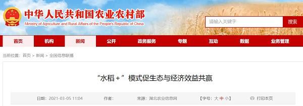 """""""水稻+""""模式促进生态效益和经济效益的双赢"""