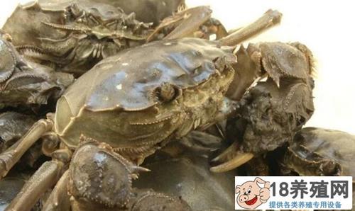 大闸蟹、小龙虾、鳜鱼生态混养,亩产效益过万元!