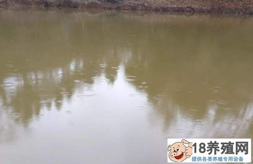 泥鳅养殖模式:泥鳅池塘养殖怎么搭建