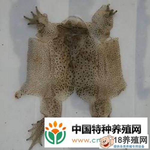 野生蟾蜍养殖技术(3)