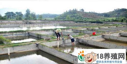 甲鱼生态养殖场的建设(2)