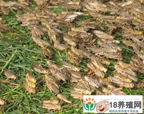 蚂蚱养殖利润分析(2)