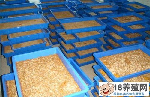 黄粉虫的冬季管理技术(2)
