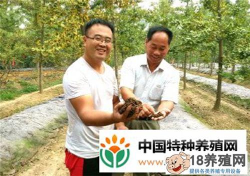 小伙树下养蚯蚓1亩地每年纯利1万元