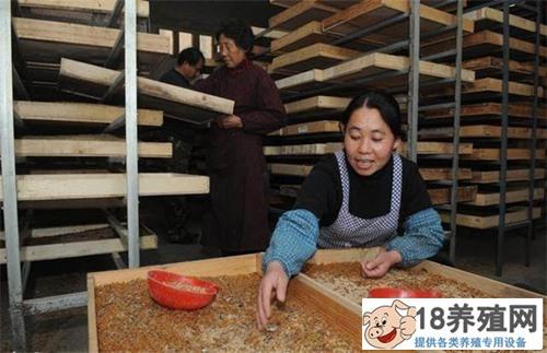 刘勇低成本养殖黄粉虫:轻松养好虫