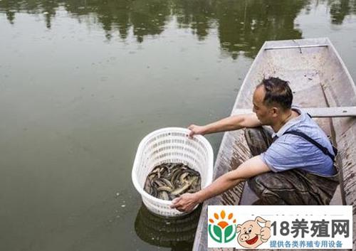 70亩泥鳅年产值达240万?他养泥鳅有啥高招