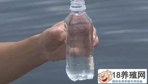 庄红根养大闸蟹的方法很神秘,养蟹后水更清了!(2)