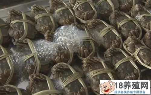 河蟹种草投螺生态养殖技术