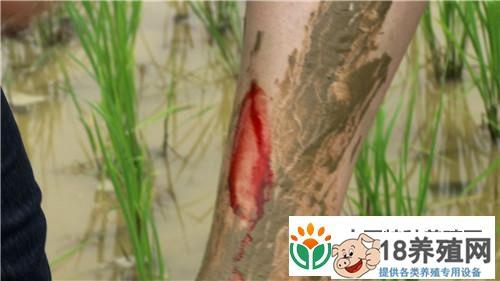 钟振芳种水稻不施肥不打药一亩地年收入一万元(2)