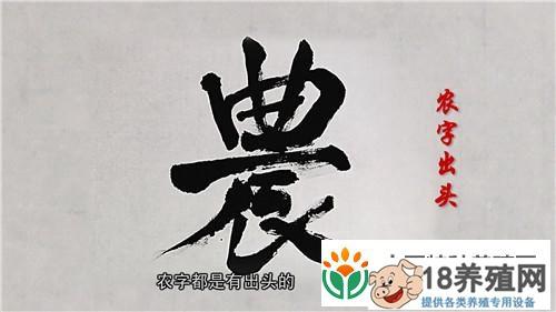 钟振芳种水稻不施肥不打药一亩地年收入一万元(3)