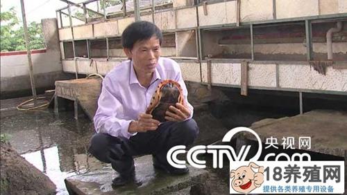 """陈明球养龟,""""龟痴""""发龟财20160126"""
