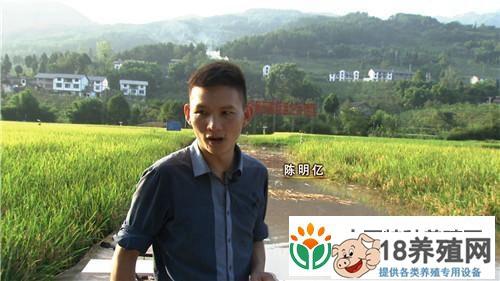 重庆武隆陈明亿稻田里养泥鳅获取另外的财富